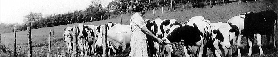 Mrs. Elda Schiesser feeding a cow.